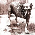 Partituras de musicas do álbum Alice in Chains de Alice in Chains